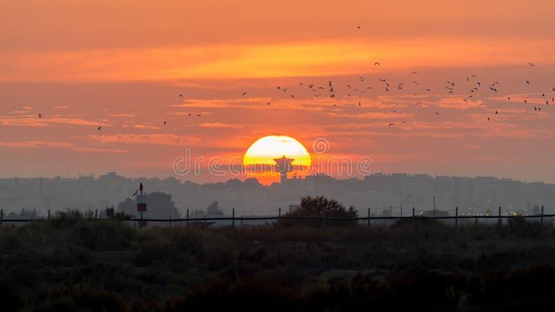 在盐蒸发池塘的太阳集合火鸟手表储备的在Olhao, Ria福摩萨自然公园,葡萄牙 免版税库存照片
