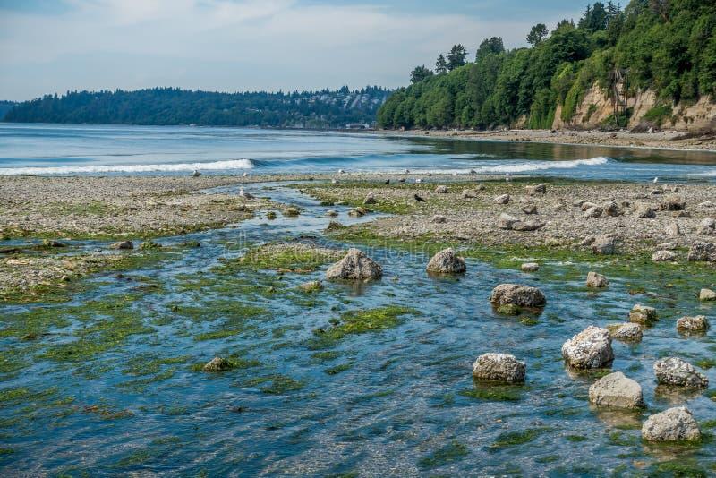 在盐水国家公园的流动的小河 免版税图库摄影