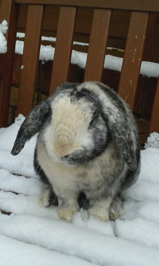 在监视的兔子在庭院里 免版税库存照片