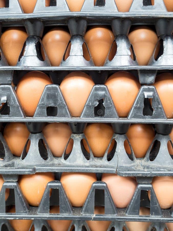 在盘区包裹的鸡蛋 库存照片