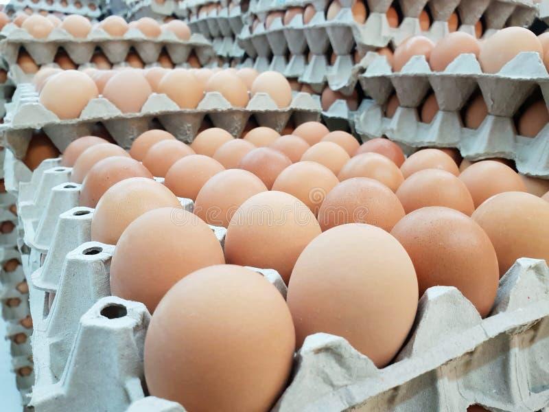 在盘区的新鲜的鸡鸡蛋在市场上 库存照片