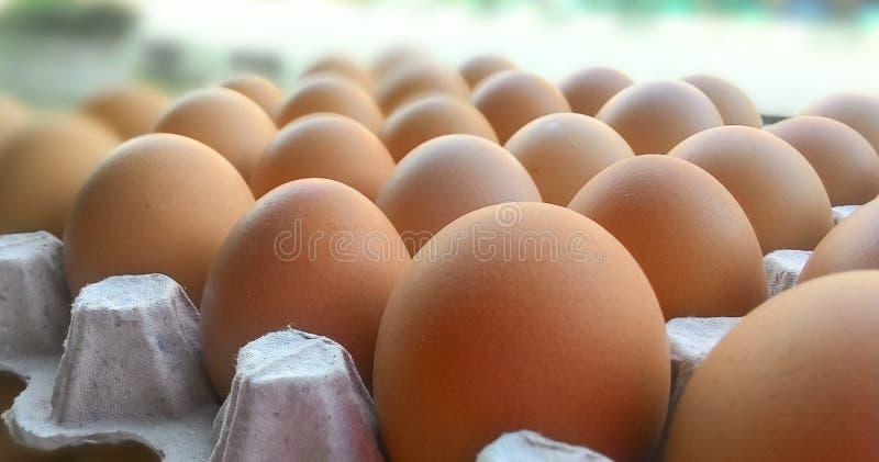 在盘区的鸡鸡蛋 库存照片