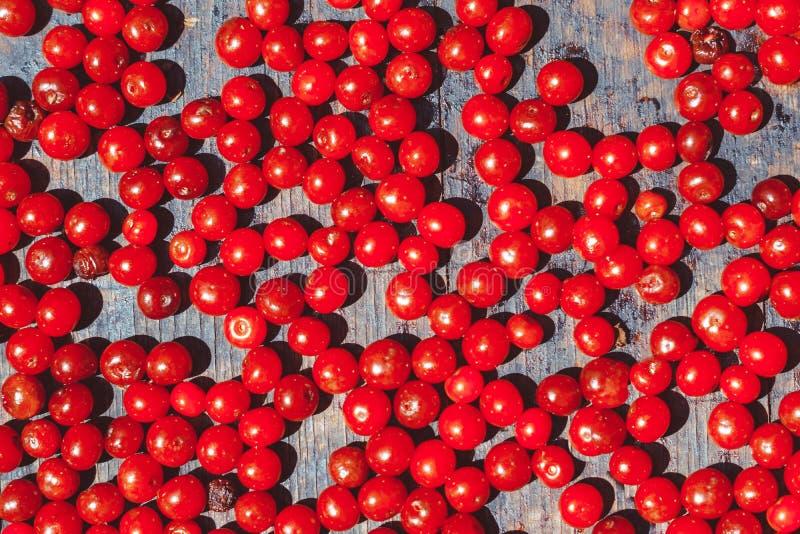 在盘子的红色莓果 免版税库存图片