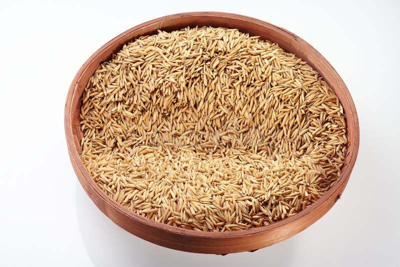 在盘子的稻 免版税图库摄影