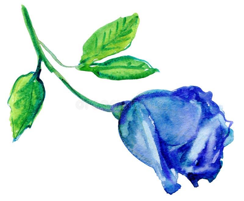 在盛开的蓝色玫瑰 库存例证