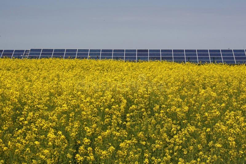 在盛开的黄色油菜籽领域和太阳电池板在背景中,反对天空蔚蓝在夏天 绿化能源 库存照片
