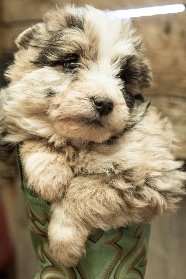 在看往边的起动的逗人喜爱的小狗 库存图片
