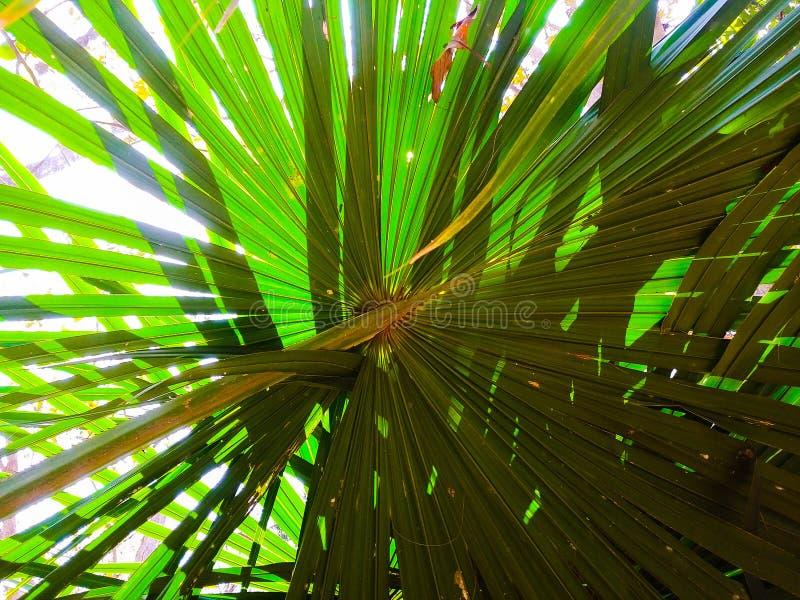 在看法棕榈叶绿色下 免版税图库摄影