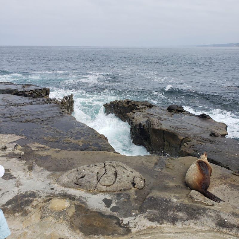 在看海洋和波浪的岩石墙壁的一个空白与附近放置的海狮 库存照片