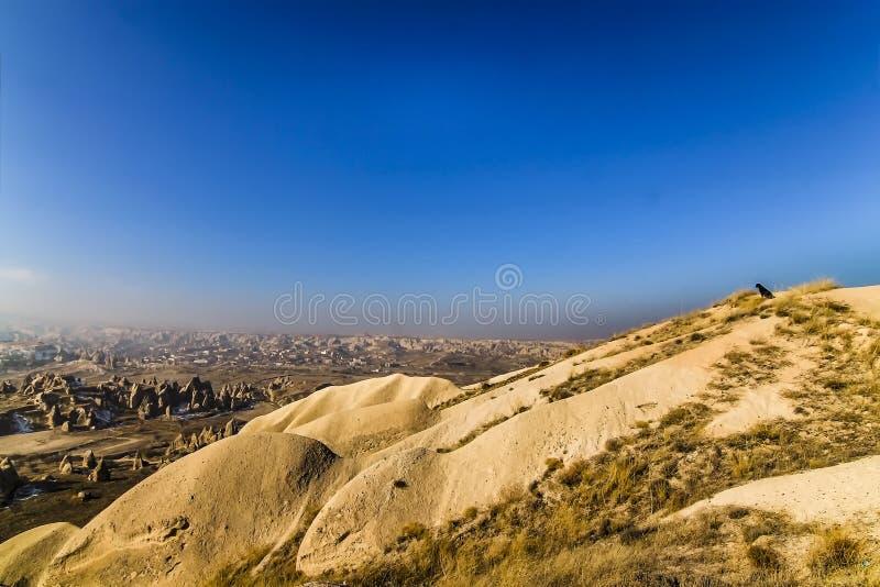 在看谷的山的一条狗卡帕多细亚 库存图片