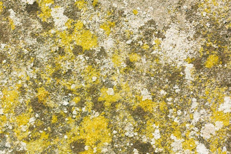 在真菌、青苔和地衣盖的混凝土墙 免版税库存图片