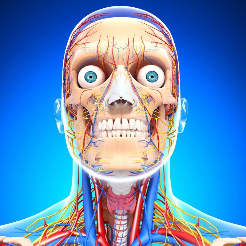 在眼睛蓝色的循环和神经系统, 库存例证