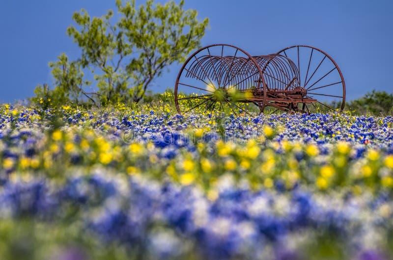 在矢车菊的领域的古色古香的农场设备 库存图片