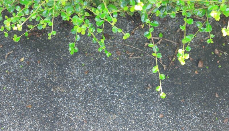 在石地面上的边界叶子 免版税库存照片