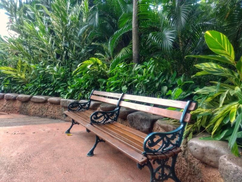 在石墙植物和树旁边的木长凳 免版税库存图片