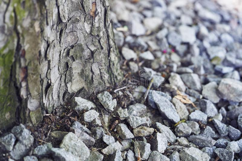 在石头之间的树干 免版税库存照片