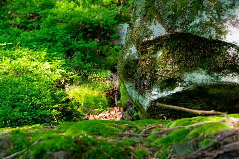 在石头和土壤的青苔 免版税库存图片