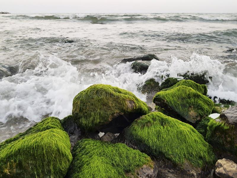 在石头的很多青苔在海水和波浪 库存照片