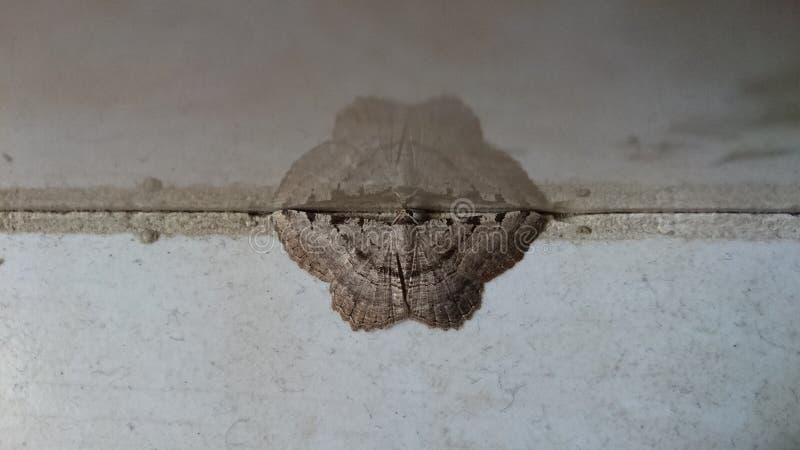 在石头的精密棕色蝴蝶镜子 免版税库存图片