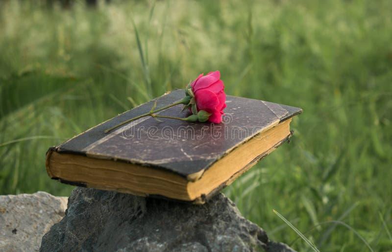 在石头设置的一本旧书,在书的一朵红色玫瑰 免版税图库摄影