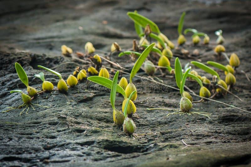 在石峭壁的野生兰花 库存照片