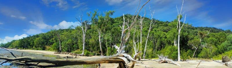 在石标附近的海滩有漂流木头的 免版税库存照片
