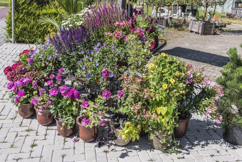 在石罐的各种各样的花外面待售 免版税库存照片