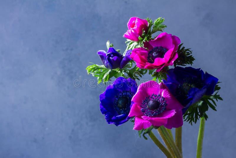 在石背景的银莲花属花 库存图片