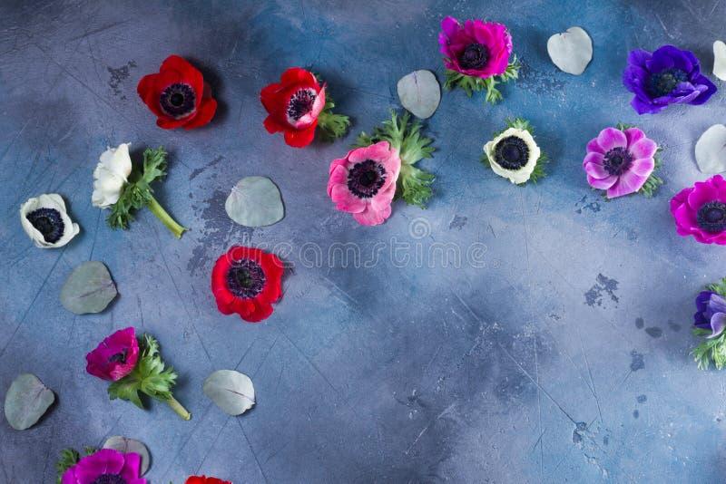 在石背景的银莲花属花 库存照片