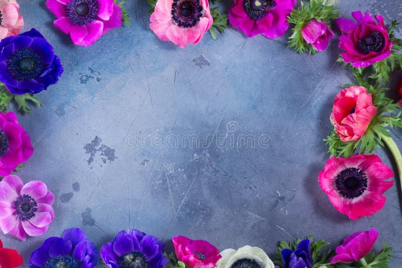 在石背景的银莲花属花 免版税图库摄影