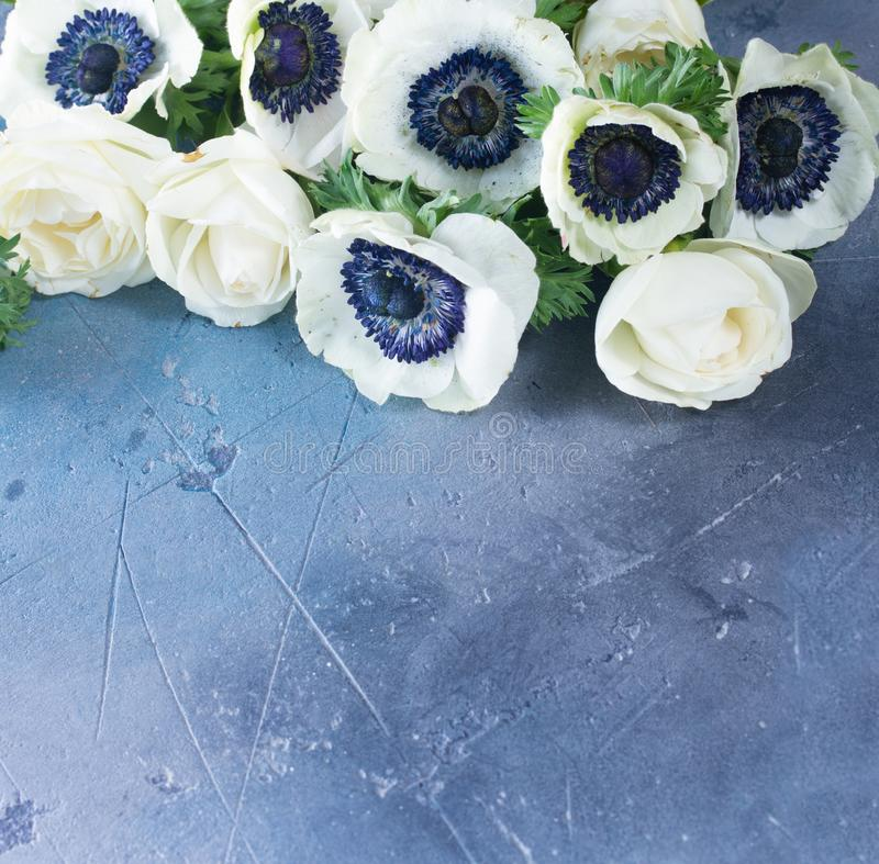 在石背景的银莲花属花 免版税库存照片