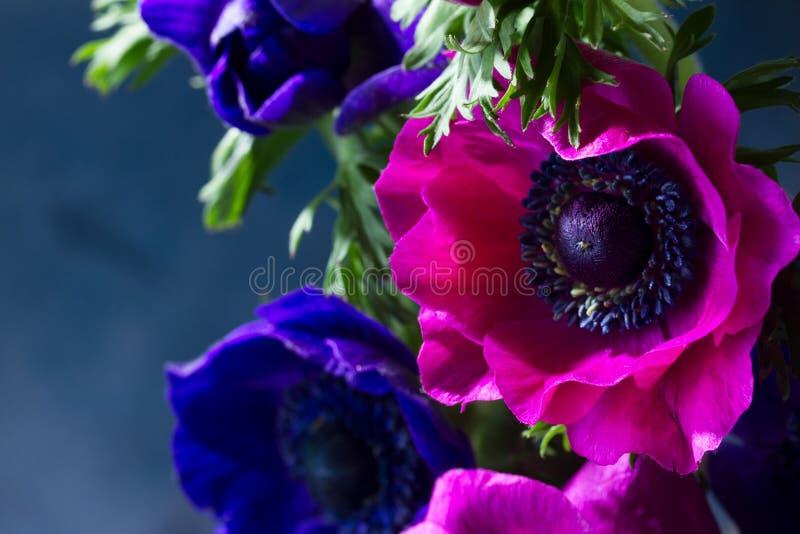 在石背景的银莲花属花 免版税库存图片