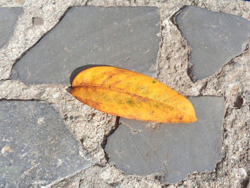 在石路面的橙色落叶 库存图片