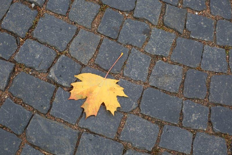 在石路面的黄色秋天枫叶 免版税库存图片