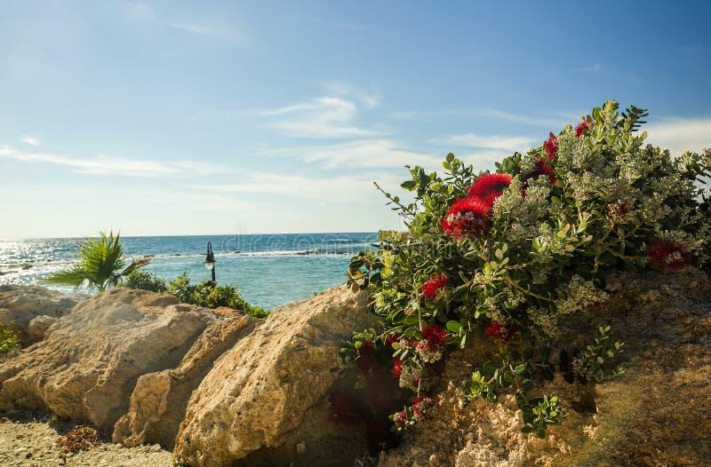 在石头的热带花临近海 库存图片