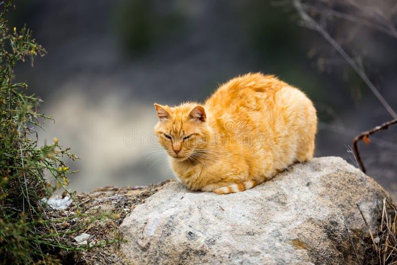 在石头的黄色猫 免版税库存照片