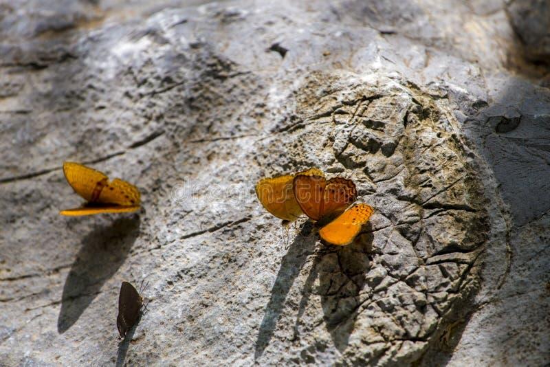 在石头的蝴蝶 免版税库存照片