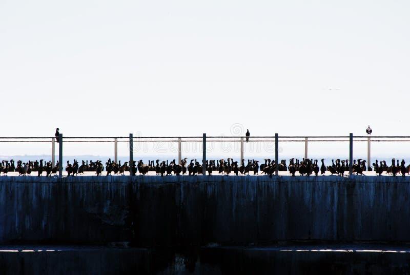 在码头的鸟 免版税库存照片