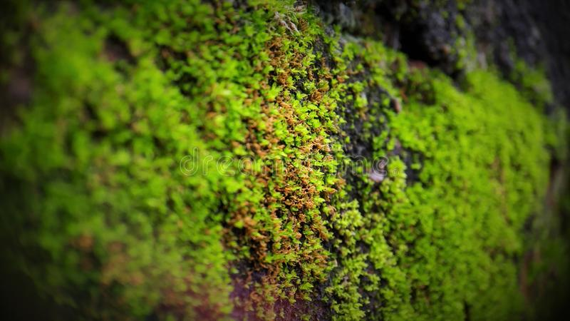 在砖墙上的海藻宏观射击 免版税库存图片