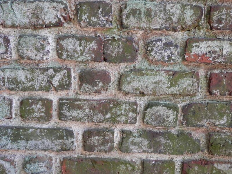 在砖墙上flecked的白色油漆 免版税库存图片