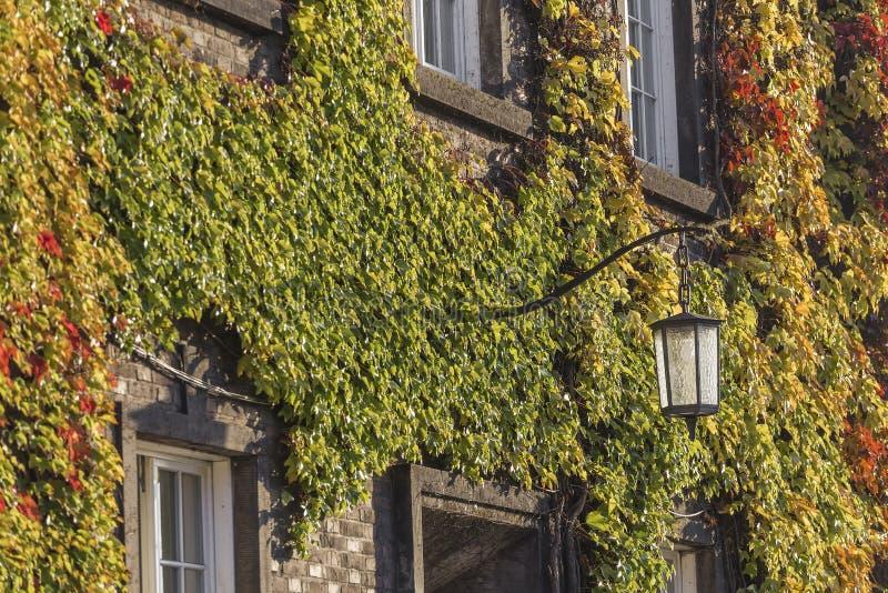 在砖墙和灯上的杂色的常春藤 库存照片