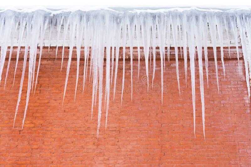 在砖墙背景的俏丽的冰柱 库存图片