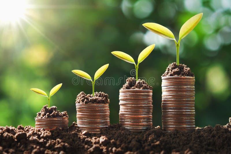 在硬币的年幼植物增长的步 概念财务和会计 库存照片