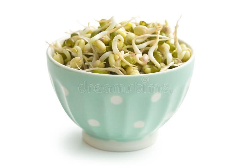 在碗的发芽的绿豆 库存照片