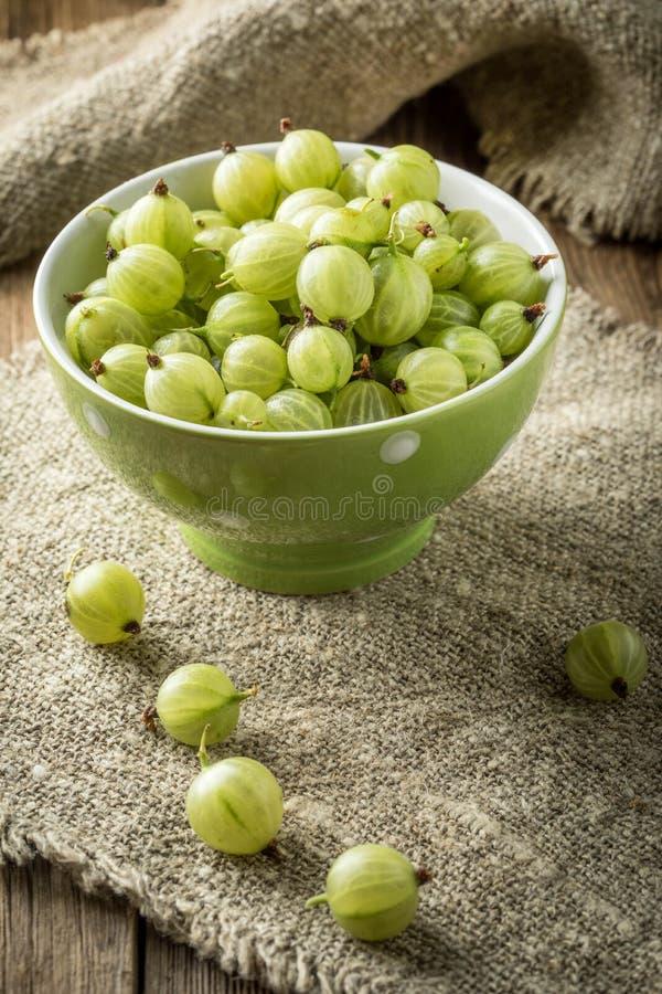 在碗的新鲜的鹅莓 库存照片
