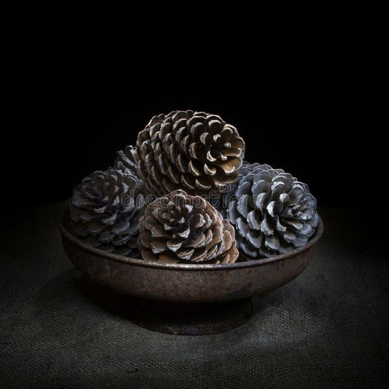 在碗的杉木锥体在黑森州,黑暗的静物画 方形的庄稼光绘画 免版税库存图片