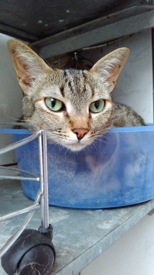 在碗的猫 库存图片