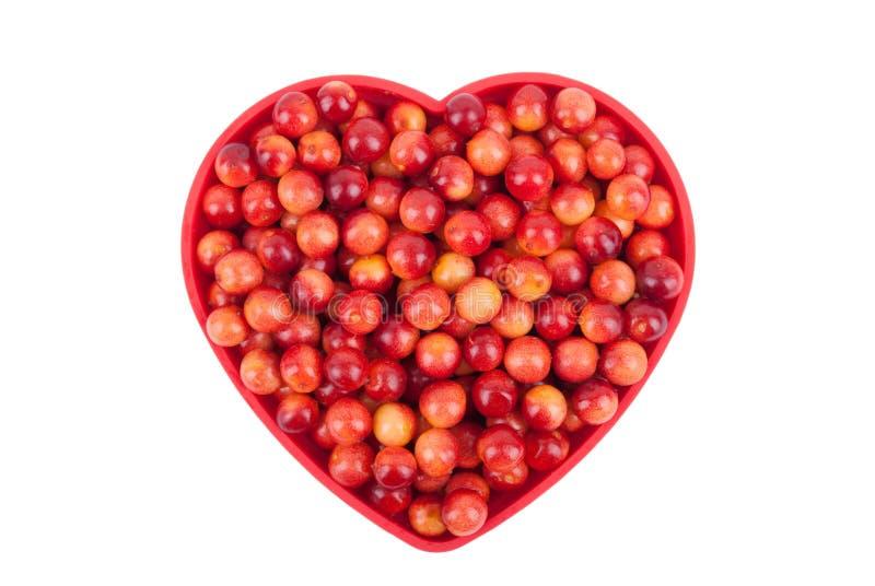 在碗的荚莲属的植物莓果 库存照片