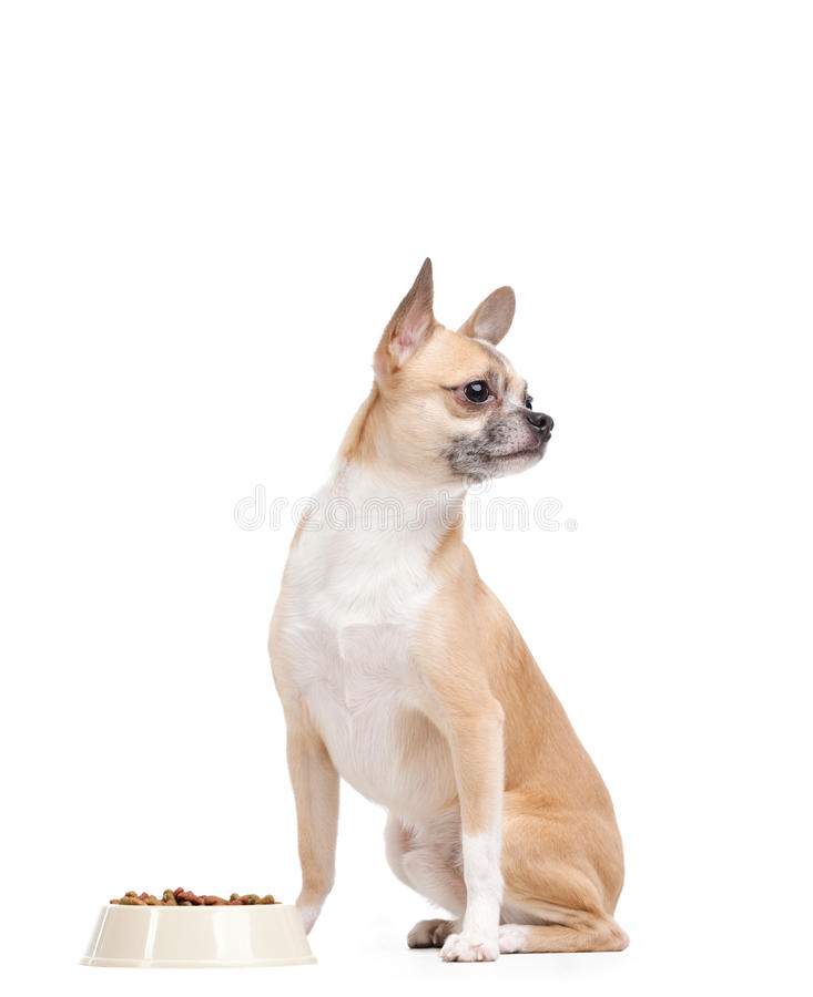 在碗附近的淡黄的小狗 图库摄影