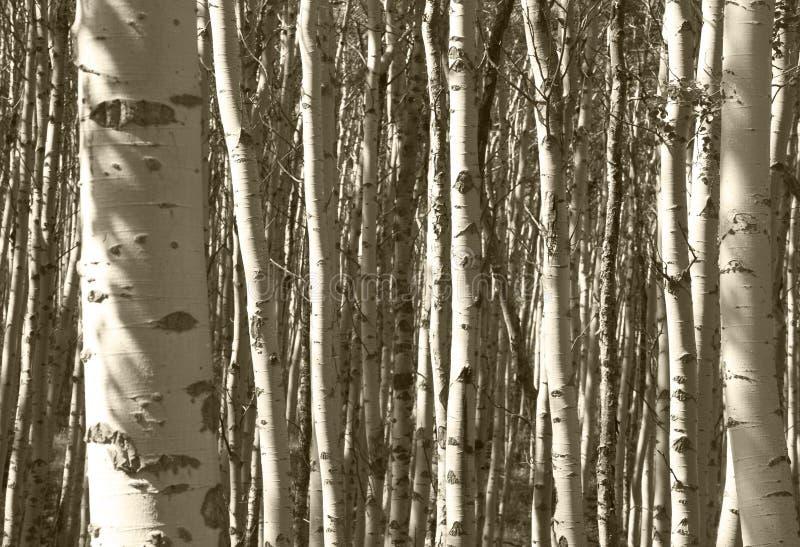 在碧玉的森林细节 航寄 加拿大 图库摄影